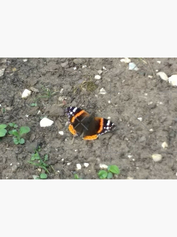 M.I. #42  ☼  Red Admiral Butterfly (Pearson Park) by Naean