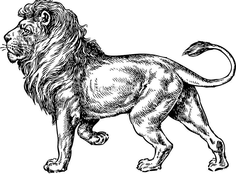 lion by koesstein-z