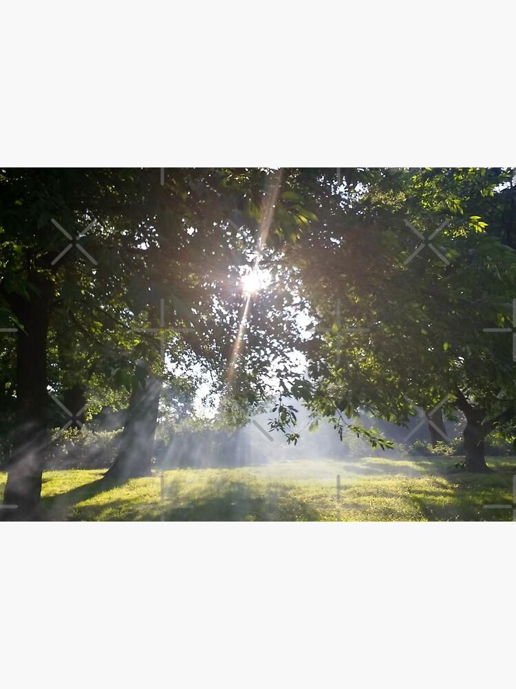 Merch #11 -- Smoky Tree Sun Rays - Landscape Shot (Pearson Park) by Naean
