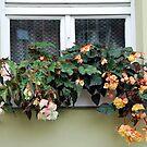 Flowers on the window-frame by Arie Koene