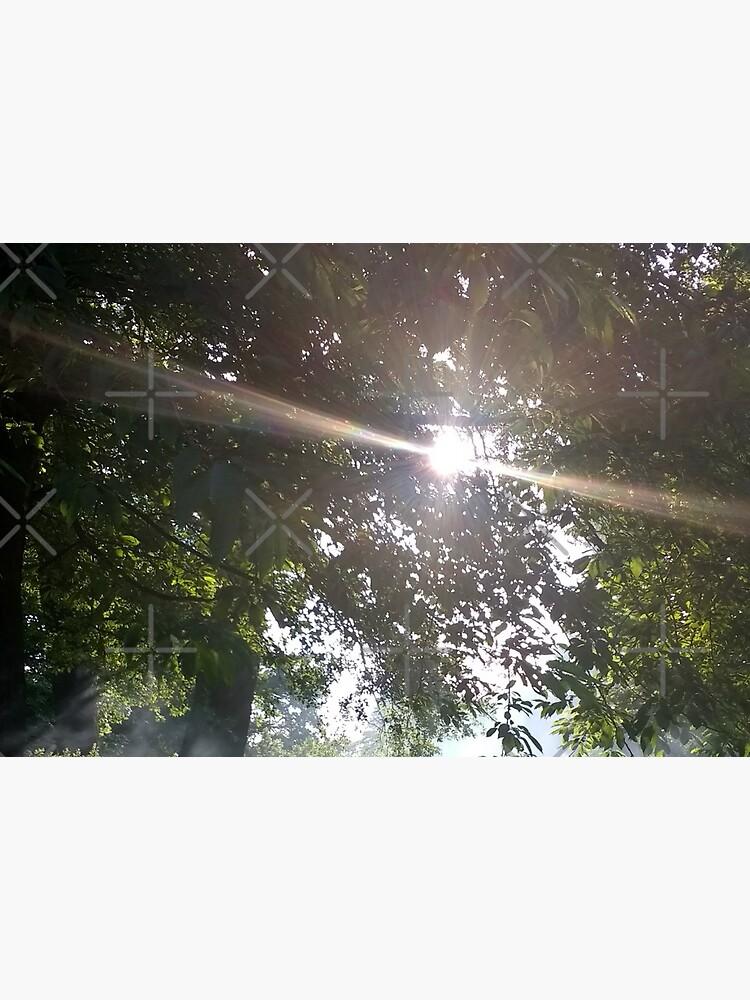 M.I. #12 |☼| Smoky Tree Sun Rays - Portrait Shot (Pearson Park) by Naean