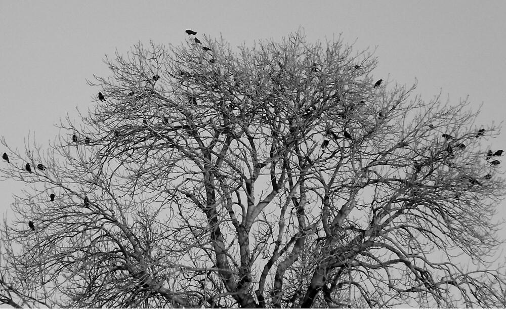 Birds by luigii