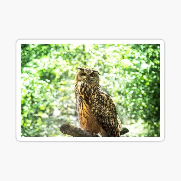 Grand Duke Owl, bird of prey photo Sticker