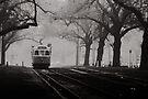 Tram Under the Elms by Andrew Wilson