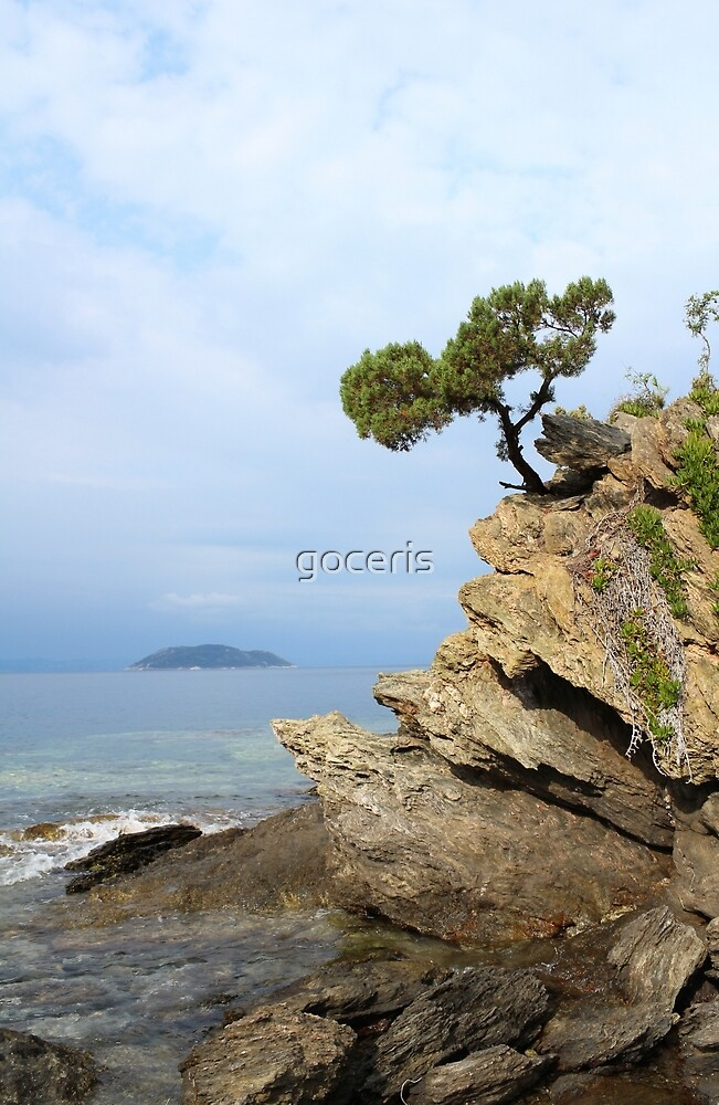 pine tree on a rock above the sea by goceris