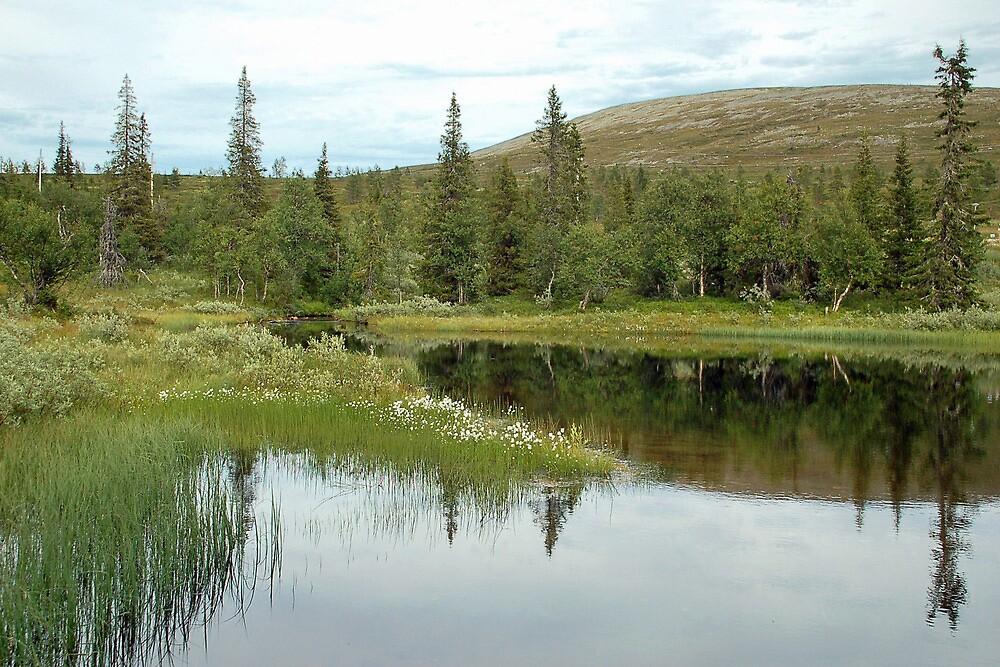 Pallastunturi - Lapland - Finland by Arie Koene