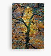 Tree Larch Canvas Print