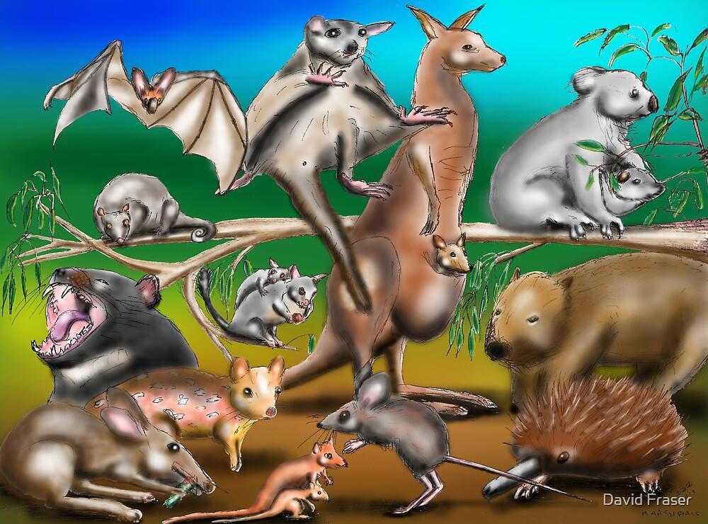 Australian Marsupials by David Fraser