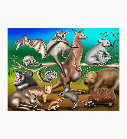 Australian Marsupials Photographic Print