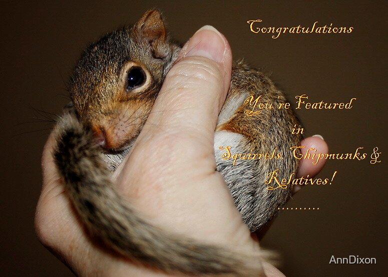 BANNER ... Squirrels, Chipmunks & Relatives by AnnDixon