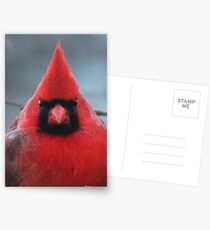 Northern Cardinal Postcards
