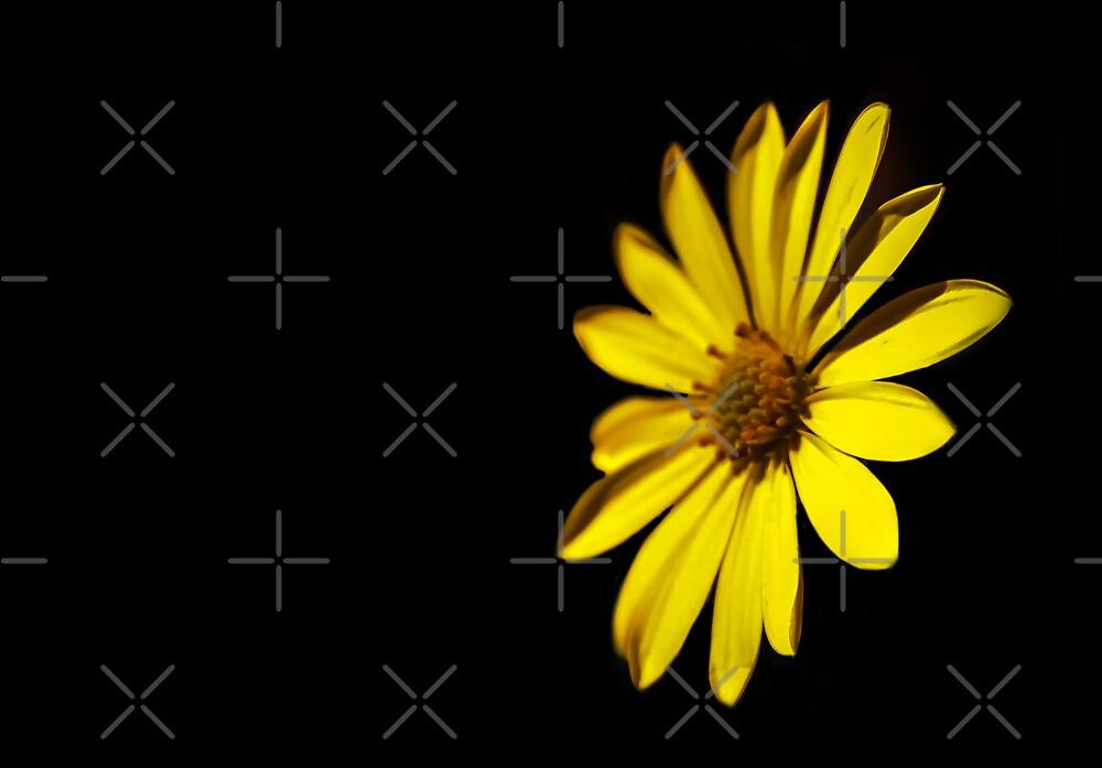 Daisy In The Dark  by Heather Friedman