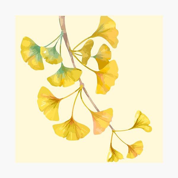arbre de ginkgo jaune doré Impression photo