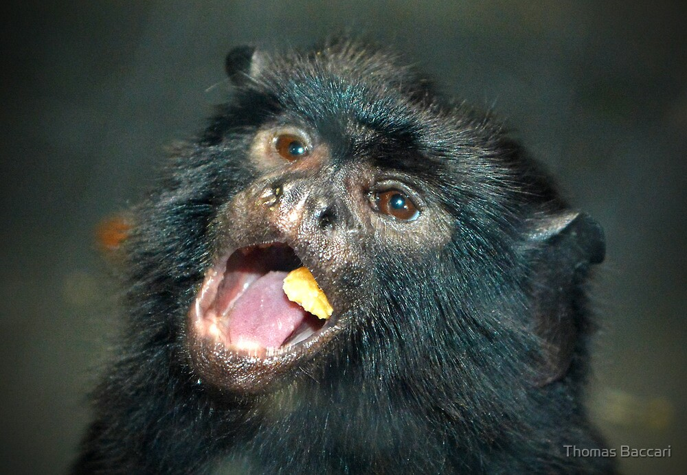Marmoset Eating by TJ Baccari Photography