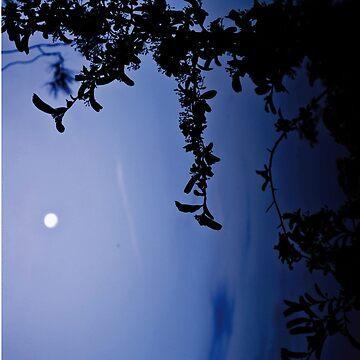 SKY by Kamya