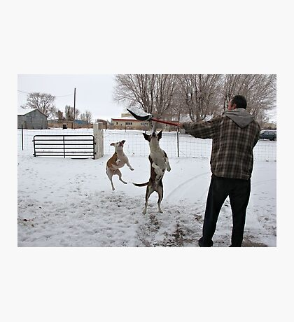 Buster and Sweetie Playing with dad and the snow~  Photographic Print
