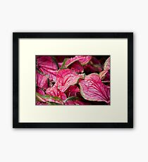 flowers at the fair Framed Print