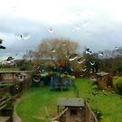 Rain Droplets by Whiteside-Art