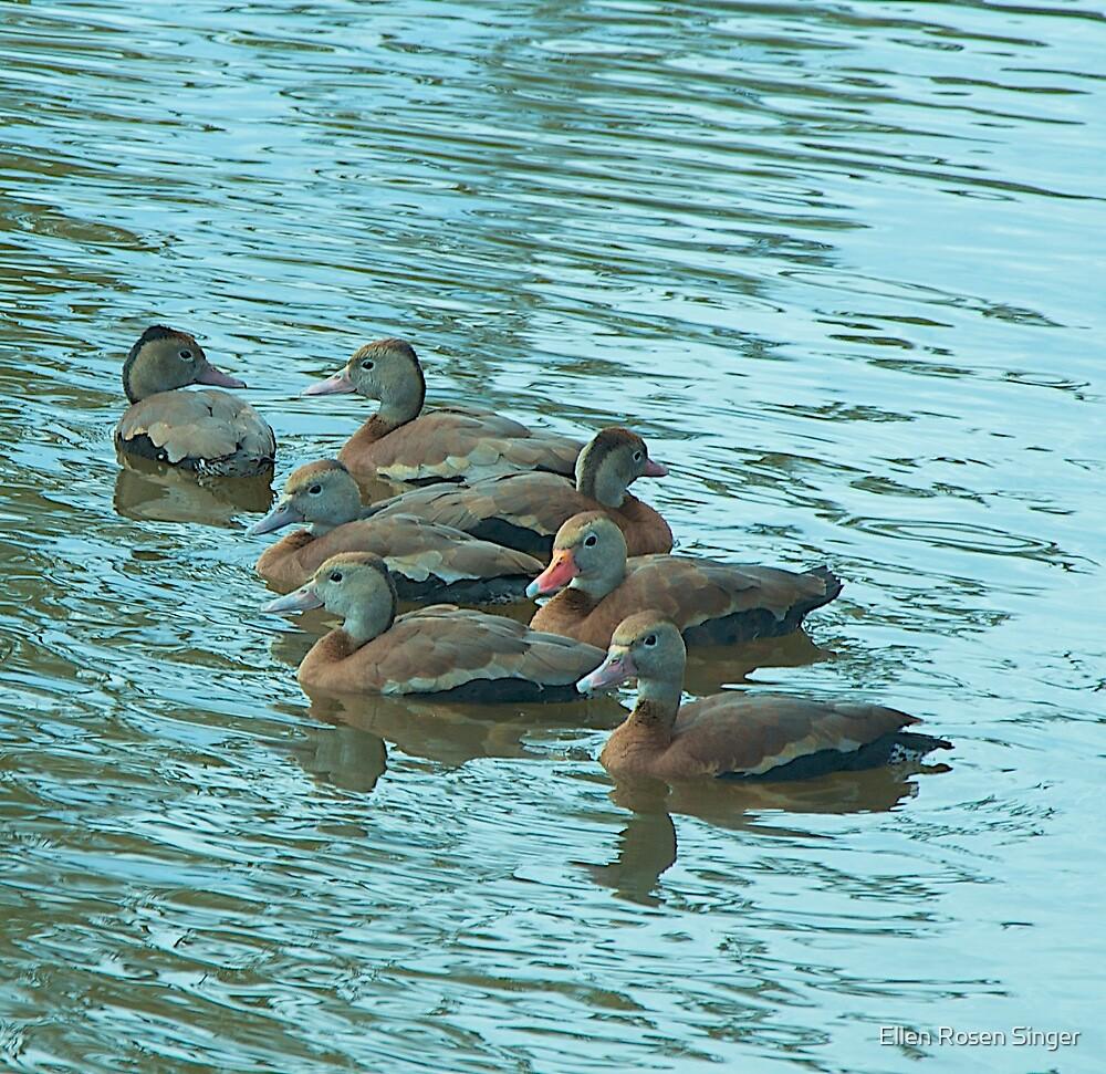 Ducks Clustered Together by Ellen Rosen Singer