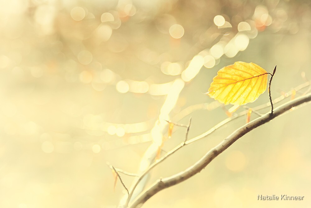 Golden Leaf by Natalie Kinnear