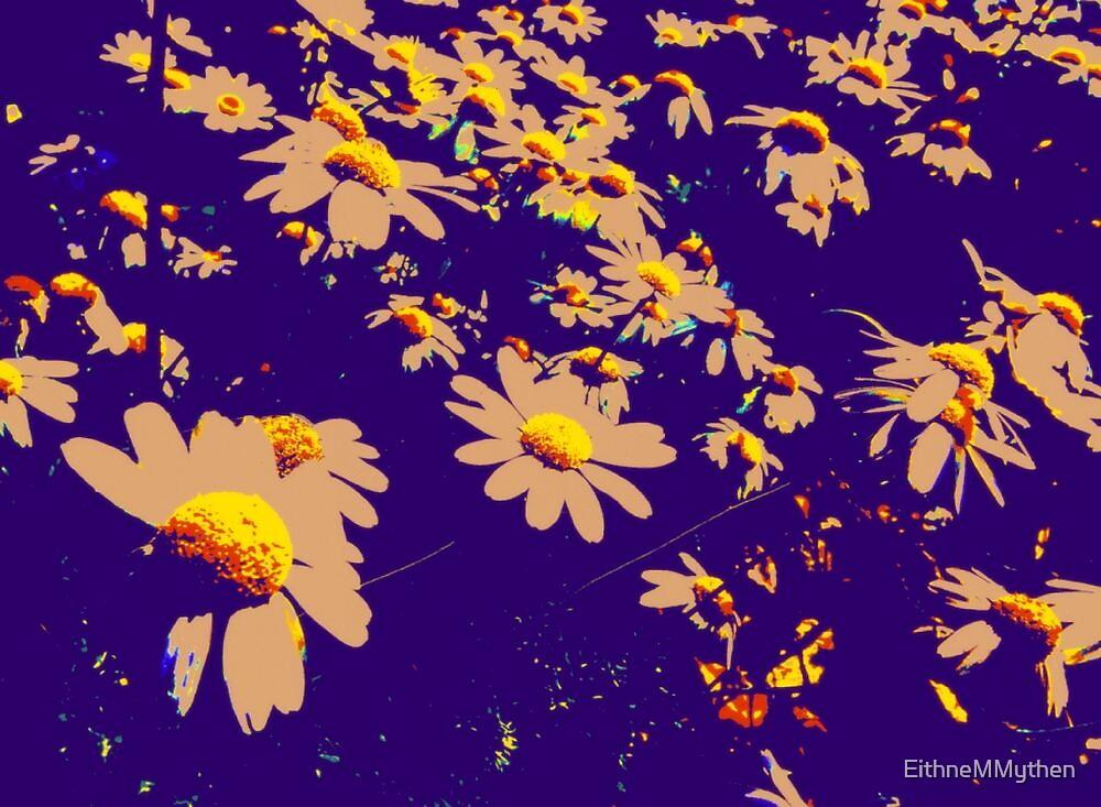 Daisies 2 by EithneMMythen