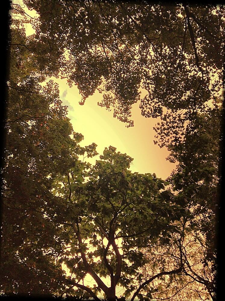 Sun shining by emilyncamp