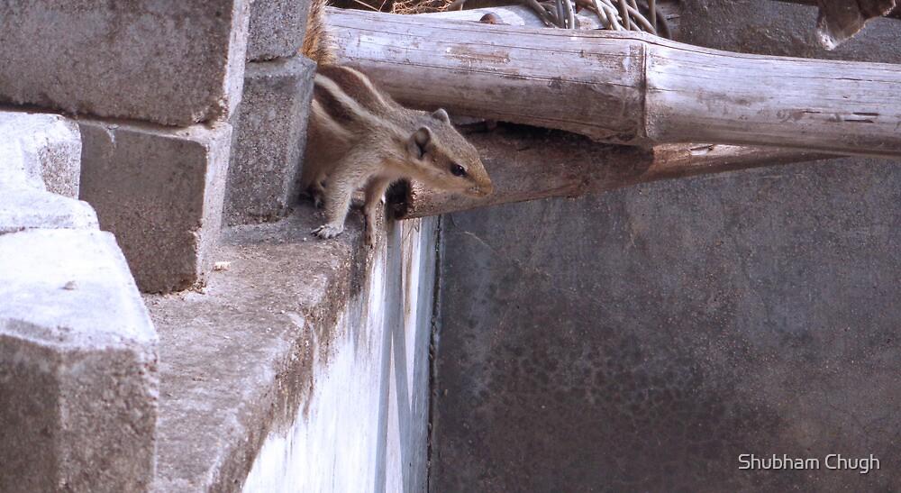 Hidden squirrel  by Shubham Chugh