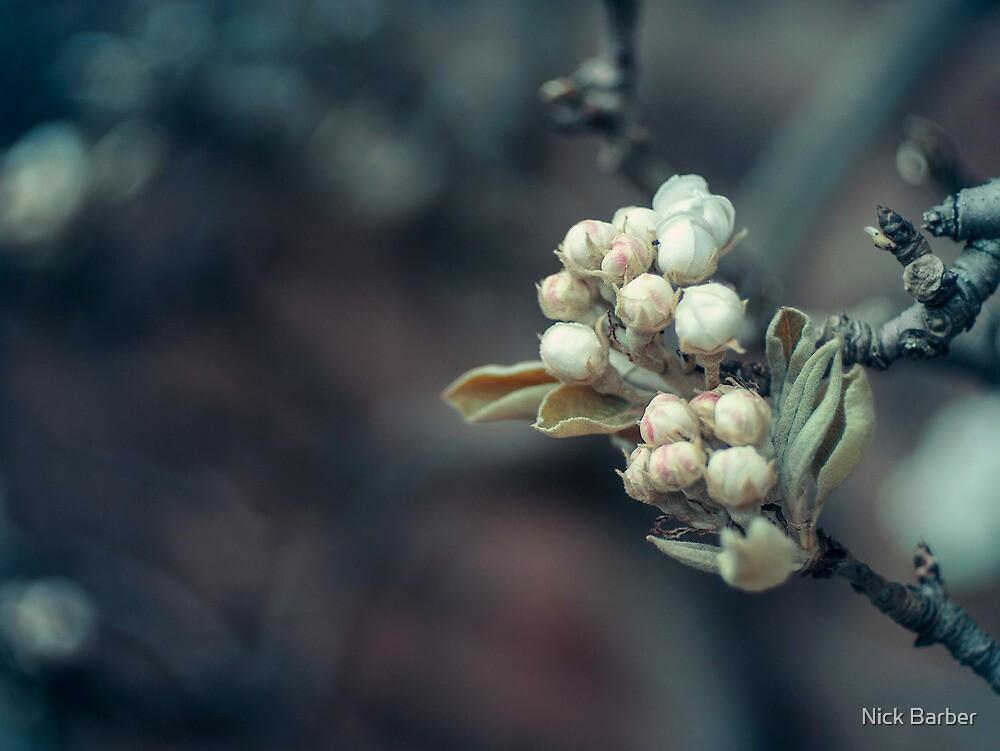 Buds by Nick Barber