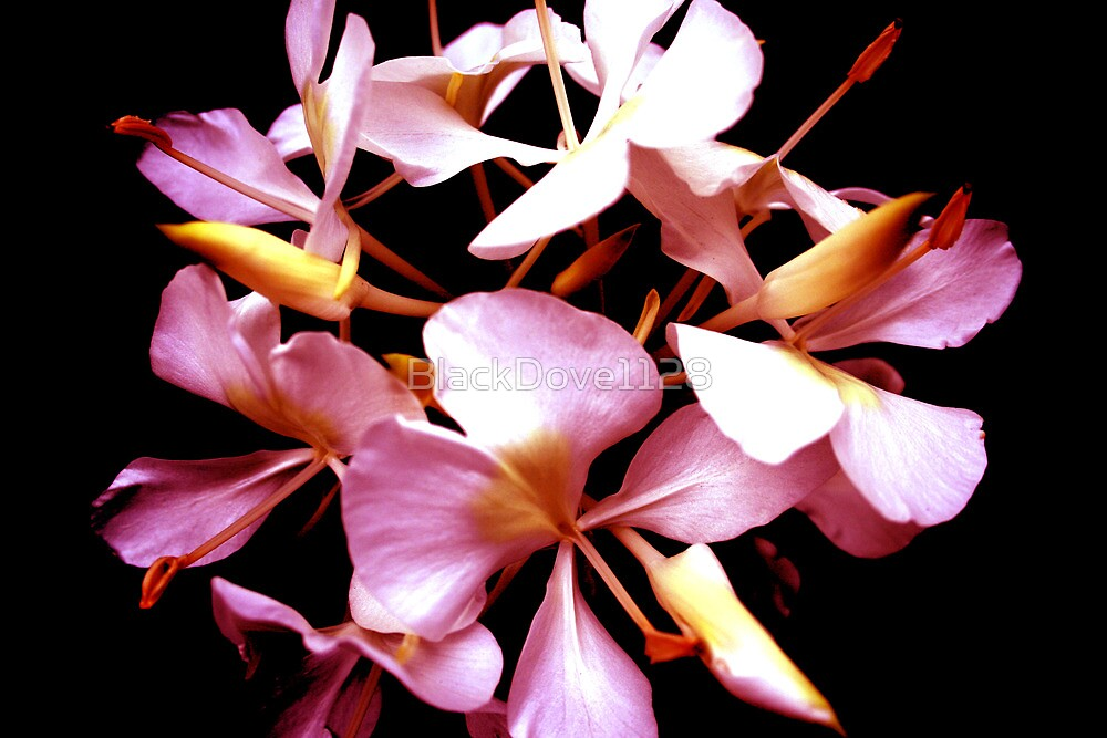 """Flower in the Dark"" by BlackDove1128"