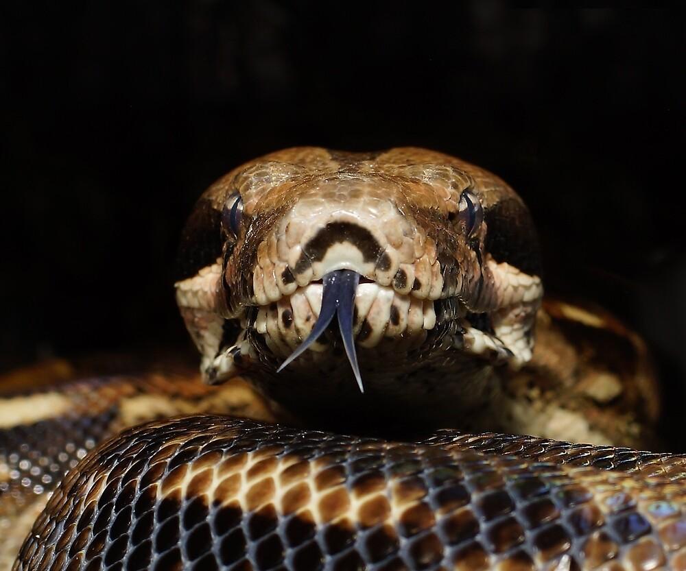 Snake eyes by StuartSiviter