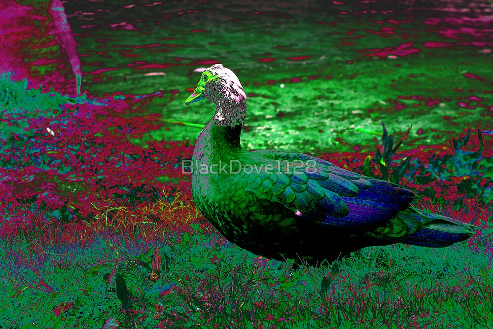 """Duck Dream"" by BlackDove1128"