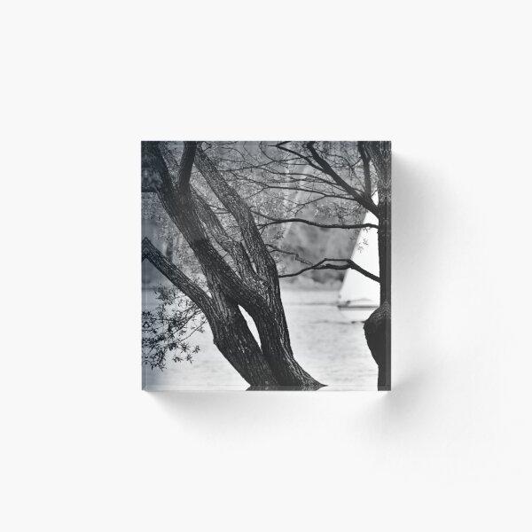 THE tree Acrylic Block