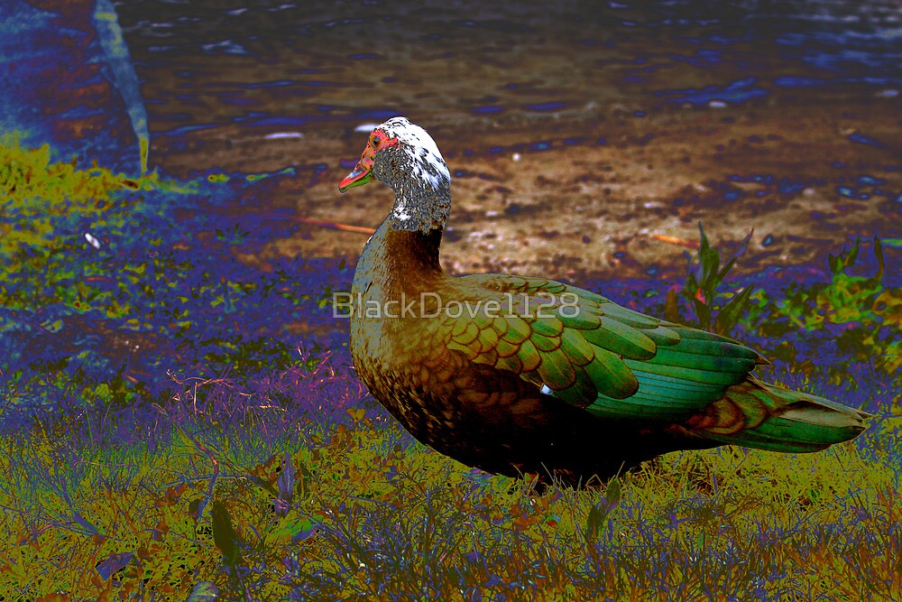 """""""Duck Interest"""" by BlackDove1128"""