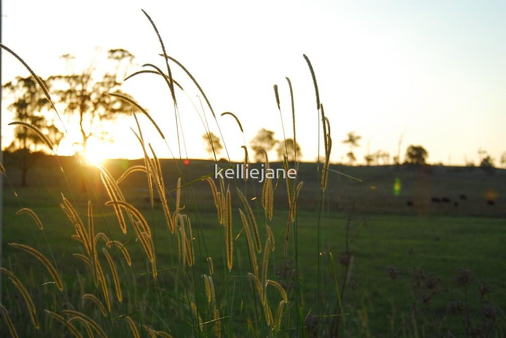 Sunset in the fields by kelliejane