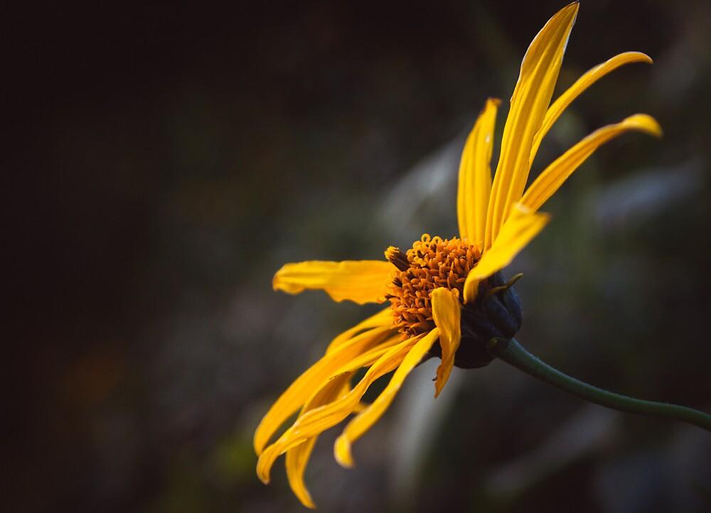 Yellow by Brook Winegardner