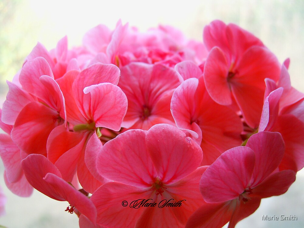 Pink Power by Marie Smith
