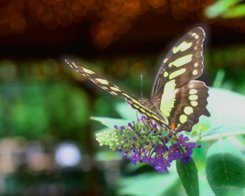 Butterfly Dreams by SmilinEyes