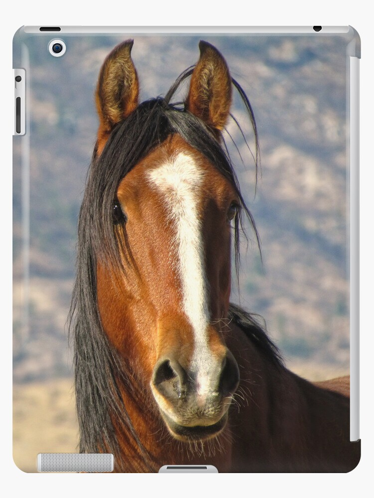 """Big Daddy"" Wild Stallion of the Virginia Range by Ellen  Holcomb"