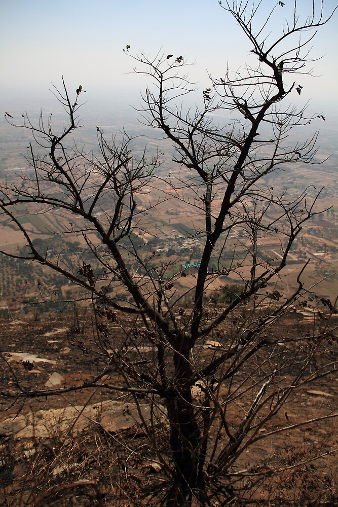 One Tree @ Nandi Hills #2 by ImaginePx