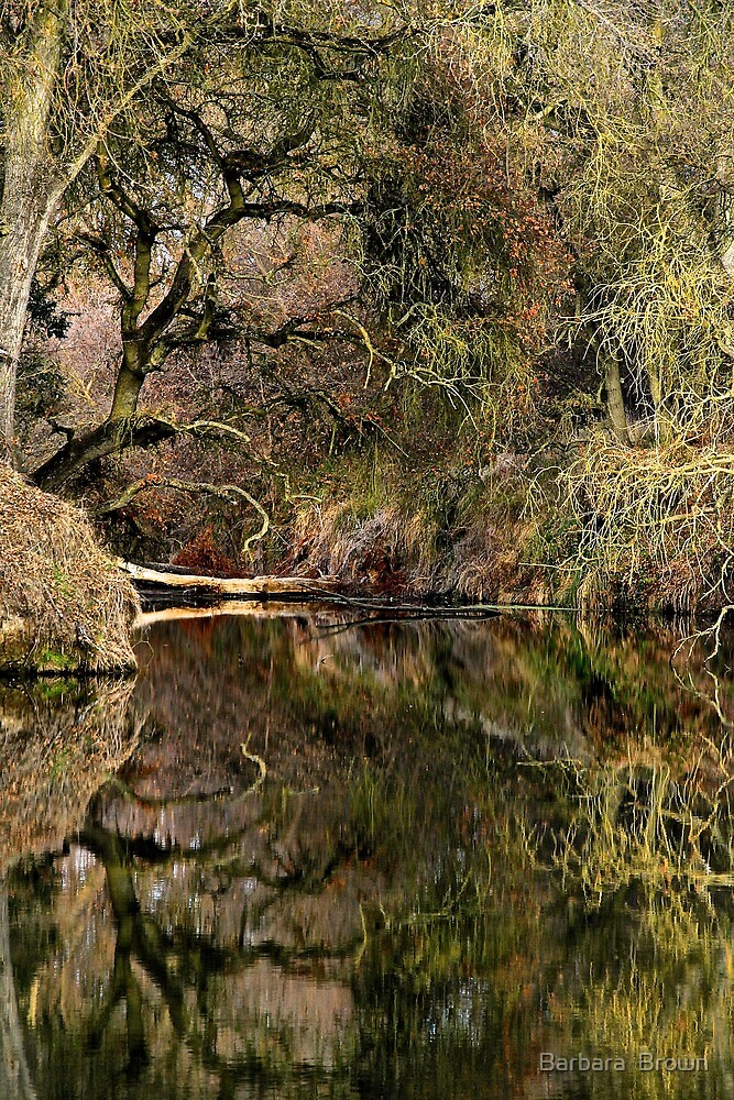 Refections on a Slough by Barbara  Brown