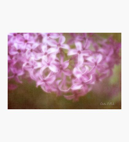 Painted Lilacs Photographic Print