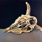Sheep skull  by Jedika