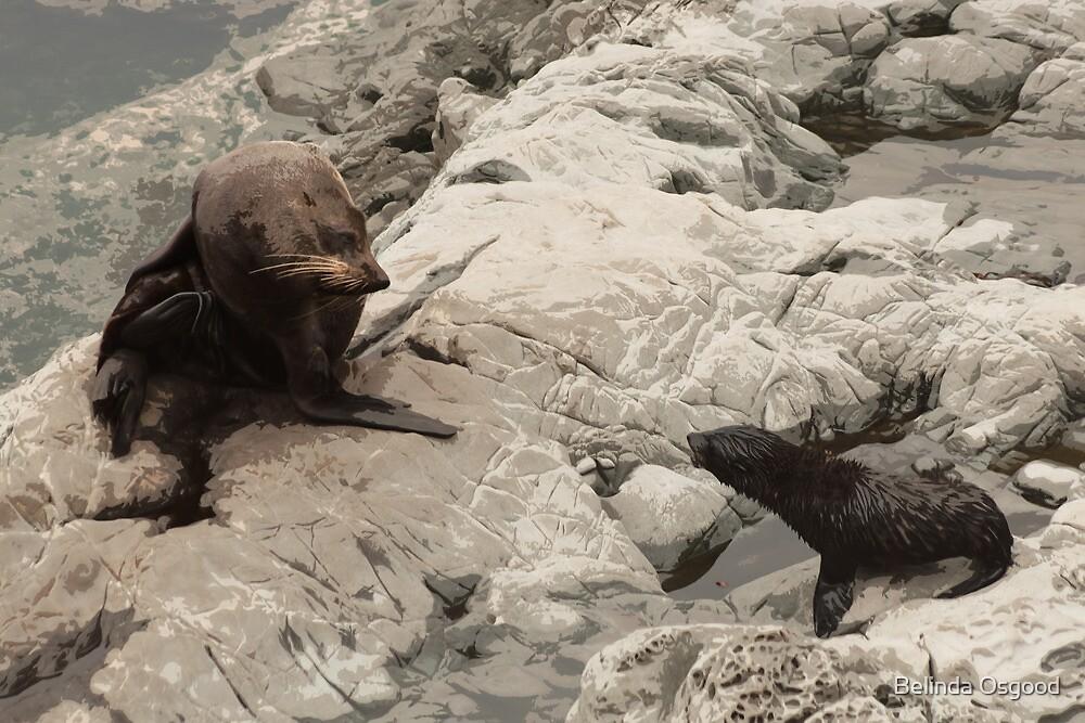 New Zealand Fur Seals by Belinda Osgood