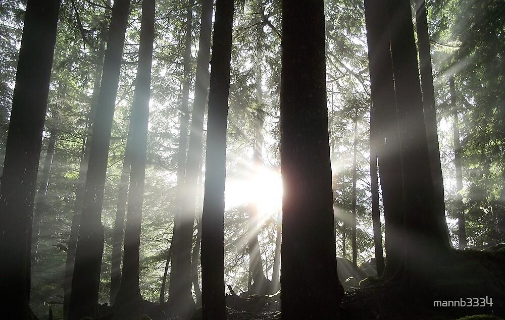 Sun Through the Trees by mannb3334