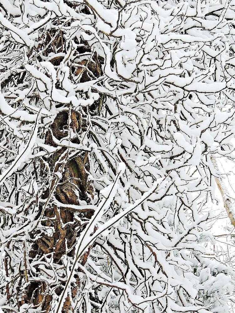 Snow Abstract IV by Alexandra Lavizzari