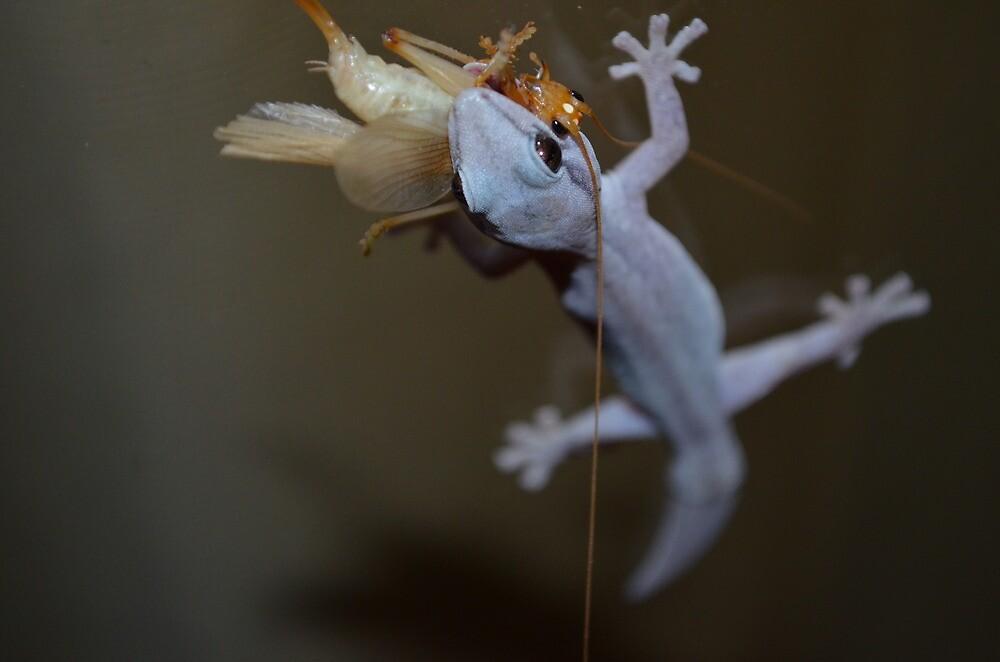 Macro Lizard Eating Insect by AliciaJayde