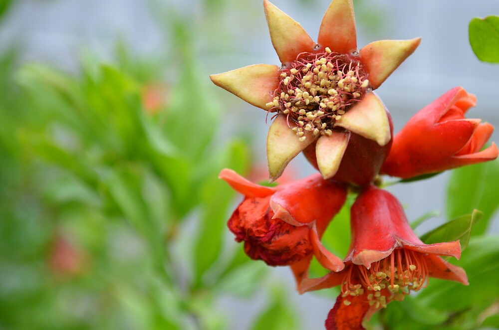 Red flower on green apple tree by AliciaJayde