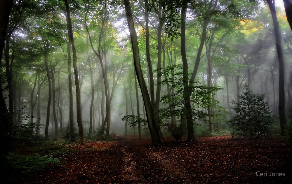 Misty Morning in the Woods by Ceri Jones