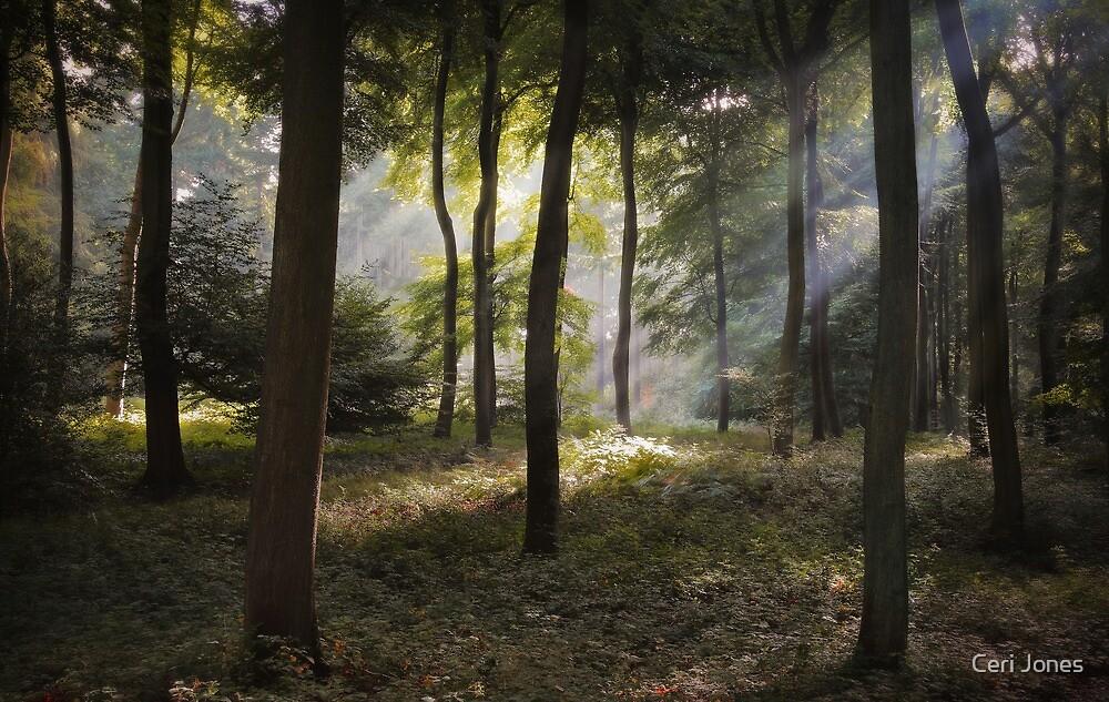 Sunlight in the Woods by Ceri Jones