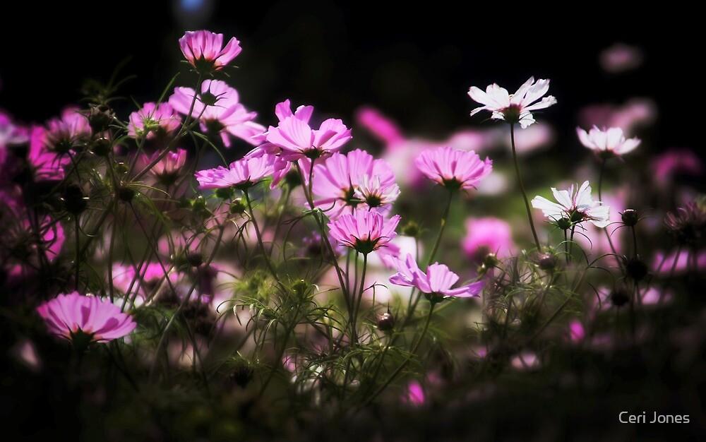 Summer Flowers by Ceri Jones